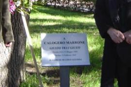 La targa sotto l'albero di cedro nella piazza dei Vespri a Linguaglossa