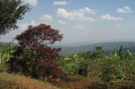 Paesaggio rwandese (fonte Flickr: utente Christopher Lowman)