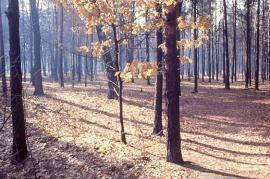 Il Parco delle Groane (fonte Wikicommons, utente Robertito1965)
