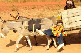 Mali, un popolo dedito alla pastorizia (foto di CGIAR Climate)